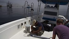 Preparing a receiver for the whalesharks