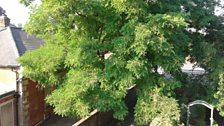 Simon's Tree