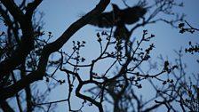 Bird in tree: The Sea Inside