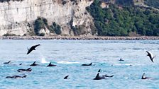 Dolphins jumping: The Sea Inside