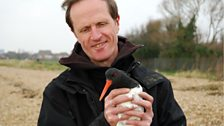 Philip Hoare with an oyster catcher. Photo taken by Peter Wilson