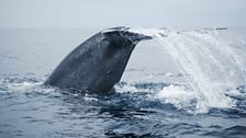 Whale's tail: The Sea Inside