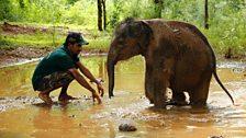 Elephant Carers
