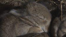The Rabbit Gallery