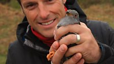 Cuckoo tagging and Nick Baker