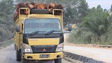 Trucks in the Riau province