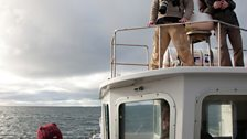 Searching for fin whales