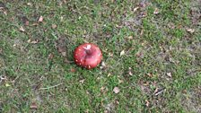 Champs Hill - A Toadstool