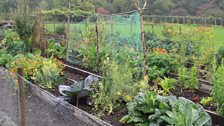 The Vegetable Ground