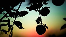 Apples in the shadows. Photo: Bill Bradshaw
