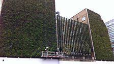 The 'Green Wall'