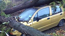 Storm damage in Salisbury