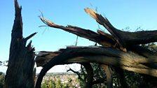 Storm damage in Swindon