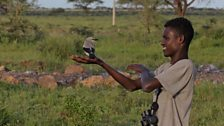 Young Borana guide releasing marked bird