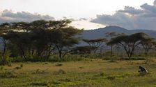 Rangelands near Yabello