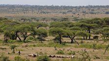 Young Borana pastoralist tending goat herd on the plains