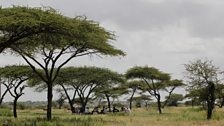 Pastoralists meeting under the shade of the Acacia