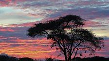 Weaver tree and Ethiopian Sunset