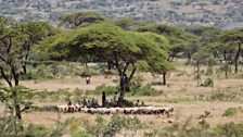 Young pastoralists shading from the heat of the day