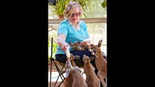 Episode 2 - Head of a charity called Wildcare feeding a group of orphaned joeys milk in her back yard.