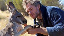 Episode 3 - Brolga has a particularly close relationship with this kangaroo called Ella.