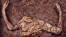Iron age bog body