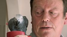 Alfie the parrot and Cliff