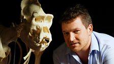 Ben with a gorilla skull