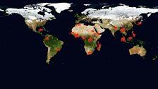 Primates across the globe