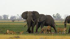Elephants and lions