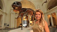A dinosaur called Sue