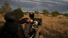 Filming the other wildlife
