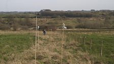 Canes marking where the traps have been placed