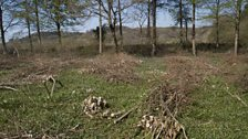 This coppice was cut only a few months ago
