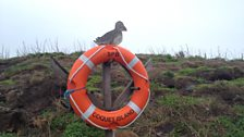 Welcome to Coquet Island!