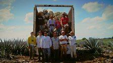 Tequila farmers