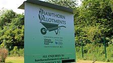 Hawthorn allotments