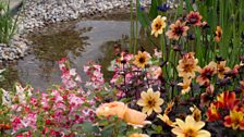 The planting blends trees, shrubs, perennials, roses and companion plants