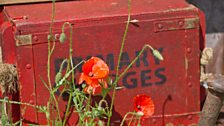Iconic field poppies