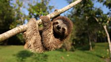Minnie the sloth hanging out