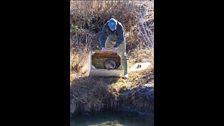 Beaver release