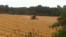Harvesting barley at Budleigh Salterton; Courtesy of Alan Oxer