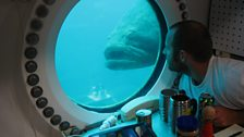 Aquanaut Ryan LaPete in Aquarius being watched by a goliath grouper.