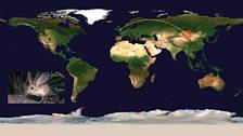Long-eared jerboa  (Euchoreutes naso), Mongolia: 4211miles (6,777km) from UK