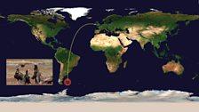 Striated caracara (Phalcoboenus australis), Falkland Islands: 8064 miles (12978 km) from UK