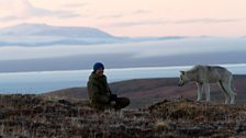 Gordon and Scruffy enjoying a game of fetch at dusk