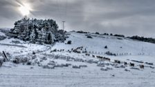 Clouds, snow and sheep at Consett
