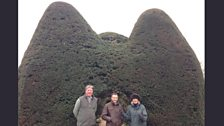 Extreme Topiary