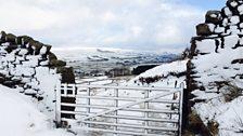 Snowy Wensleydale