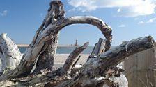 Driftwood on Roker beach
